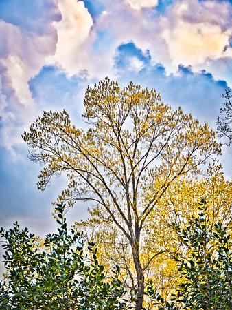 GF 2021.05 Trees