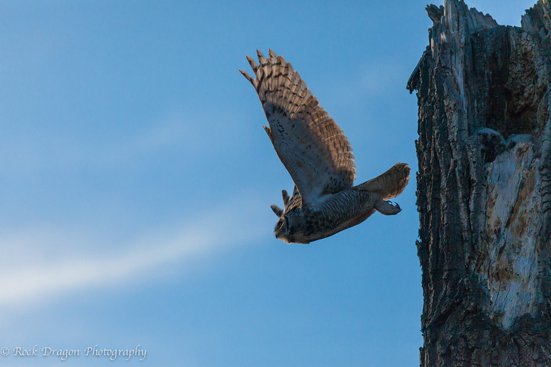 A great horned owl and her two owlets in Fish Creek Park.