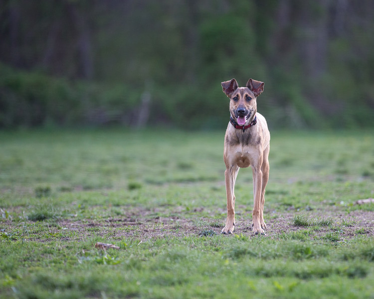 Medford Dog Park 5.2.2014-3760.jpg