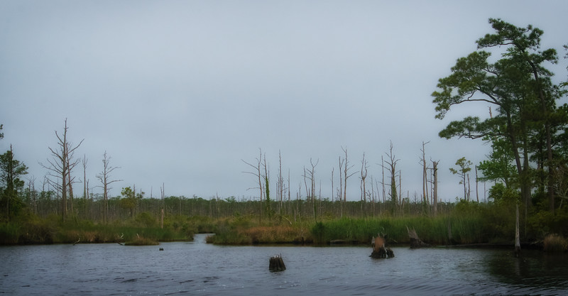 Shores of Pungo River