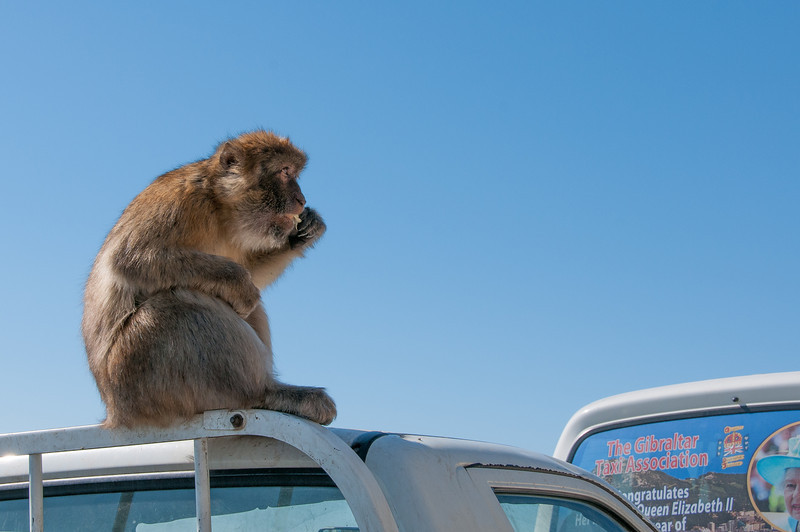 Ape sitting on the roof of a truck in Gibraltar