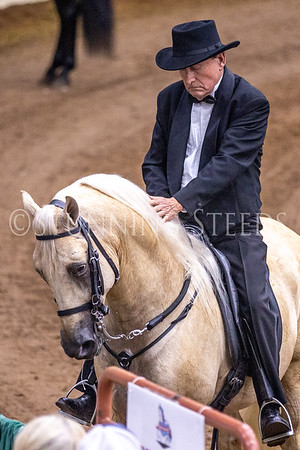 111 Fino Amateur Stallions Colts Championship