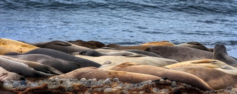Sealscape, Año Nuevo State Park, California, 2010