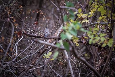 Deer Friends, 11/15/16