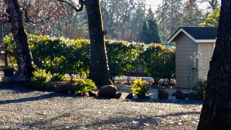 12-23-2020 Sunny Day in the Yard-2.jpg