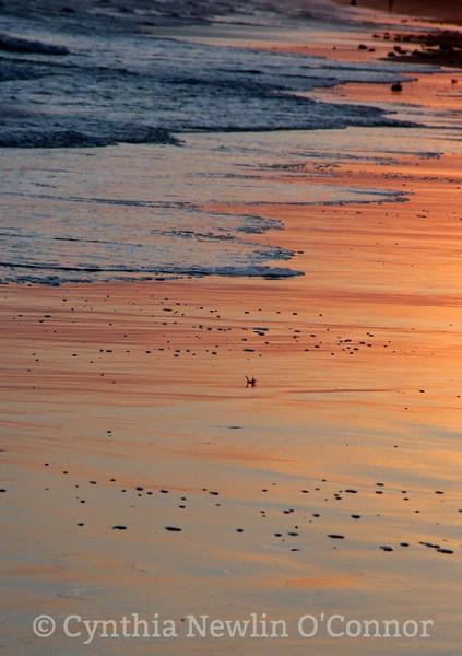 baldhead beach1.jpg