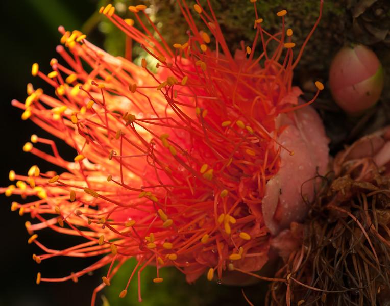 Hawaii Garden 22