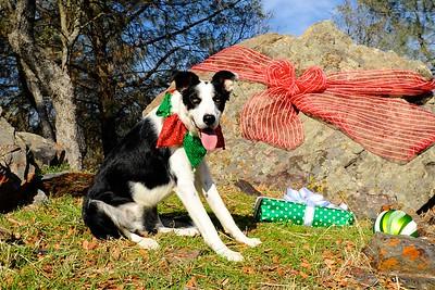 Bev's Christmas Cards
