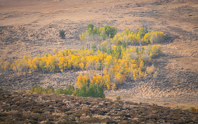 2020-10 Sierra Autumn
