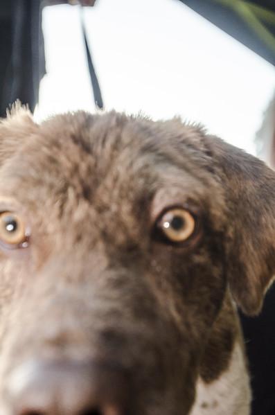 Koa up close