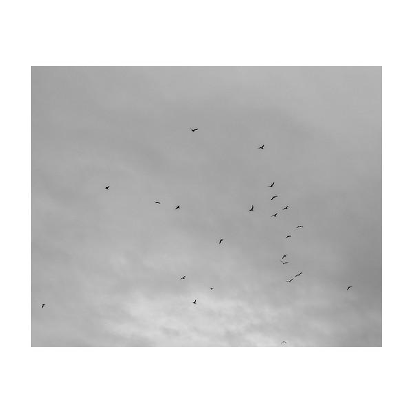 277_Birds_10x10.jpg