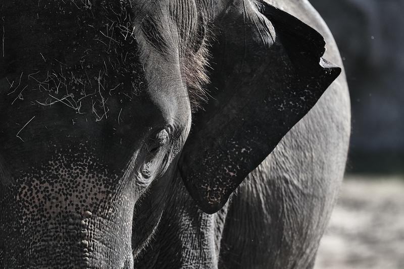 20181030 - Houston Zoo-DSC_0876.jpg