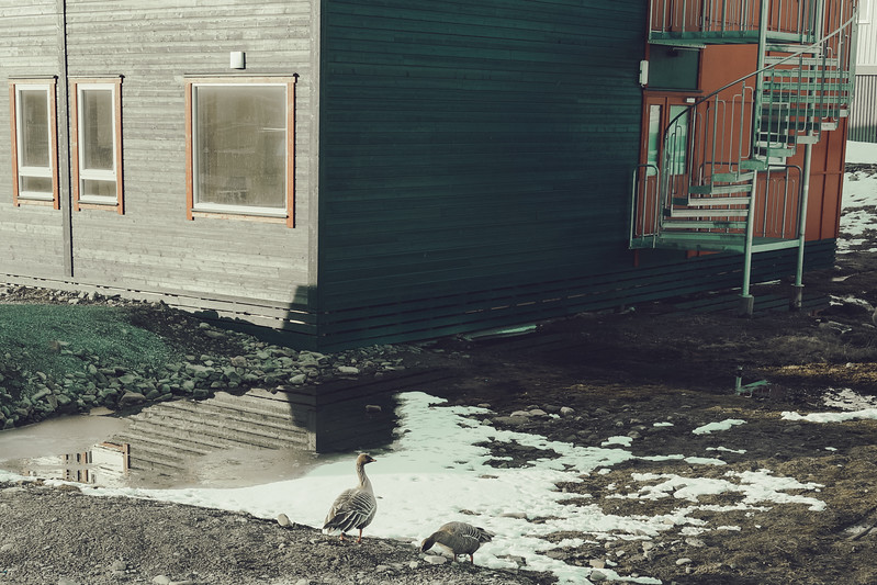 Svalbard-2013-64.jpg