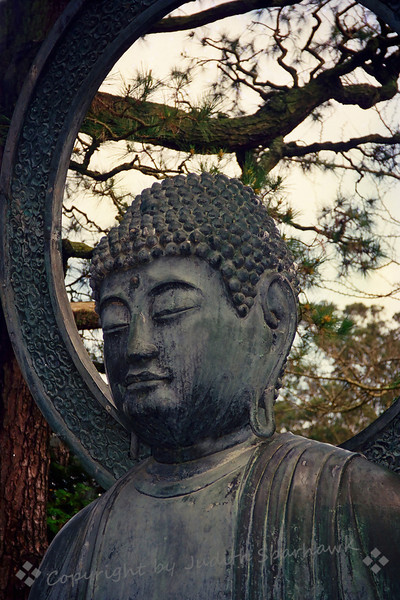 Buddha ~ This is a close-up of the large statue of Buddha in Golden Gate Park in San Francisco.  I liked the way the pine branches show through behind the sculpted circle around his head.