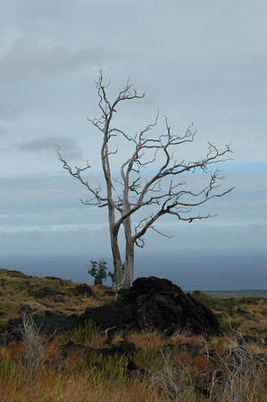 Volcano National Park, Big Island, Hawaii
