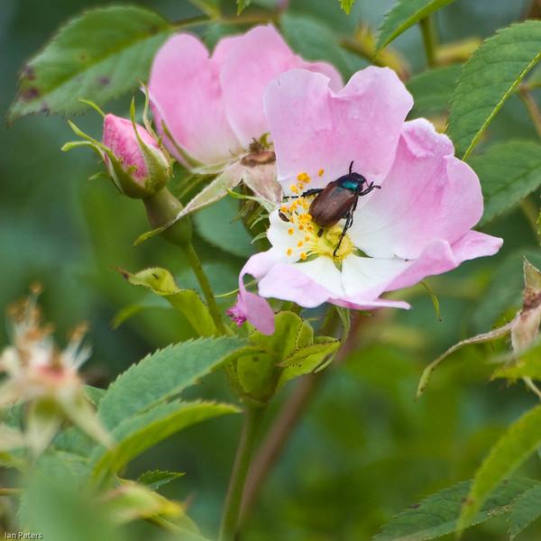 Wild Rose mealtime 4 x 4 8670-2.jpg