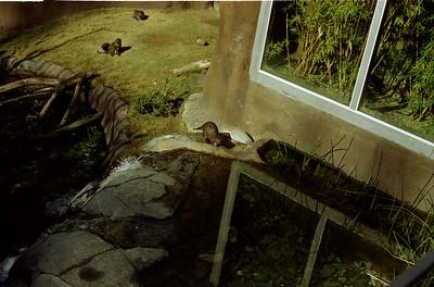 003 - Zoo & Sally's grave