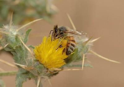 Bees&Wasps