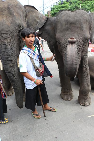 2014-11-14 Surin Elephant Welcome Feast 746.JPG