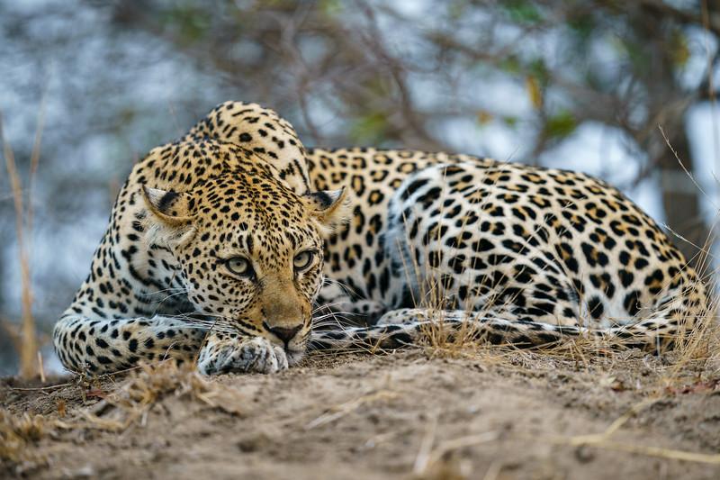 LeopardHills-20180929-0308.jpg