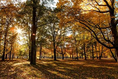 Autumn afternoon in Royal Lazienki - Warsaw