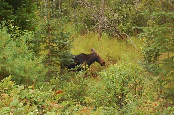 2014 Algonquin Provincial Park