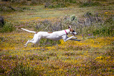 Free Coursing in the April Flowers