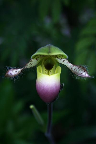 orchids 09 041.jpg