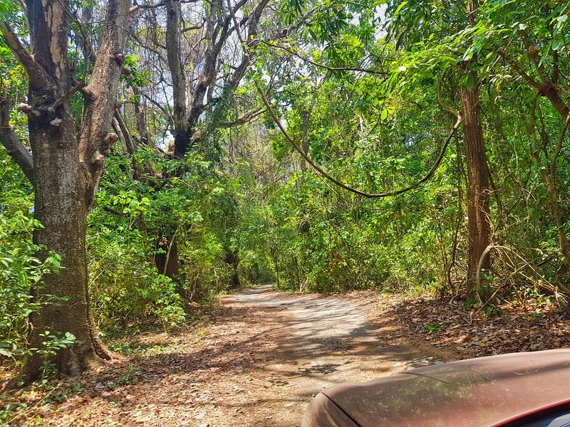 Tropical Costa Rica Rain forest