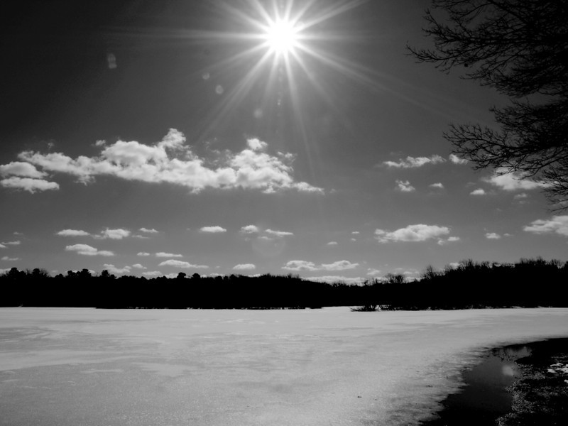 turkey swamp winter bw.jpg
