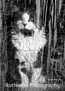 Rain, rain, go away...  Toby
