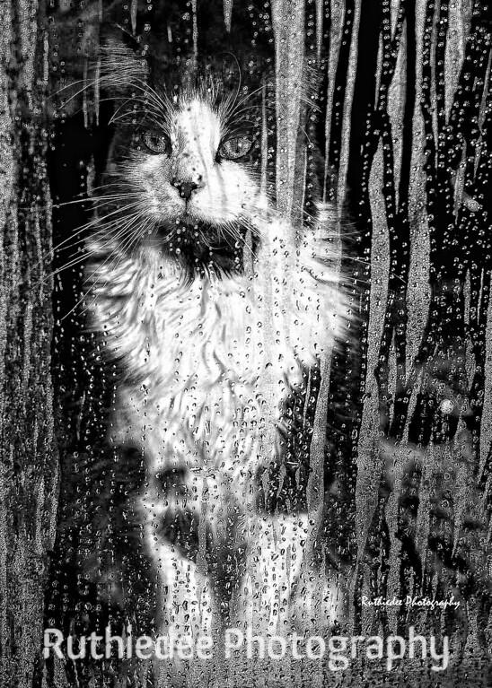 Rain, rain, go away...<br /> <br /> Toby