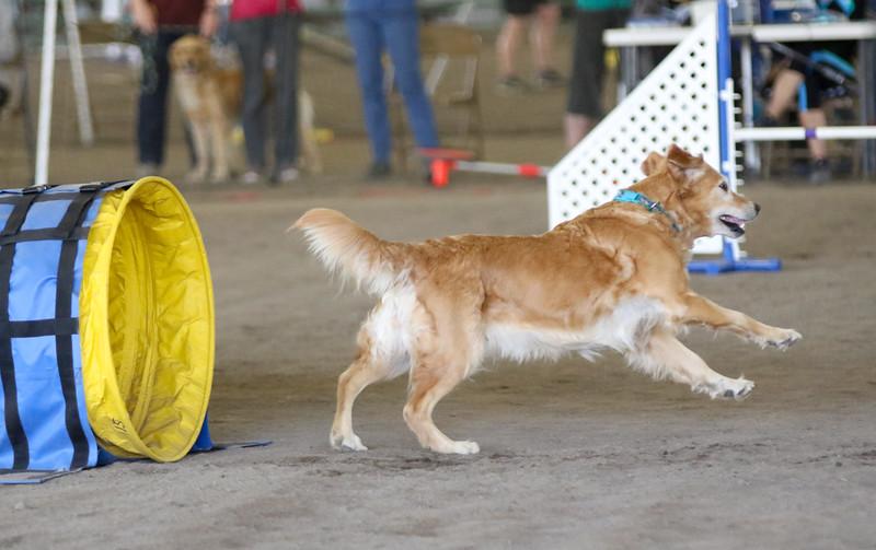 3-15-2015 Bloodhound-1540.jpg