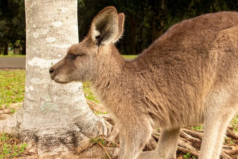 Australia_183.jpg