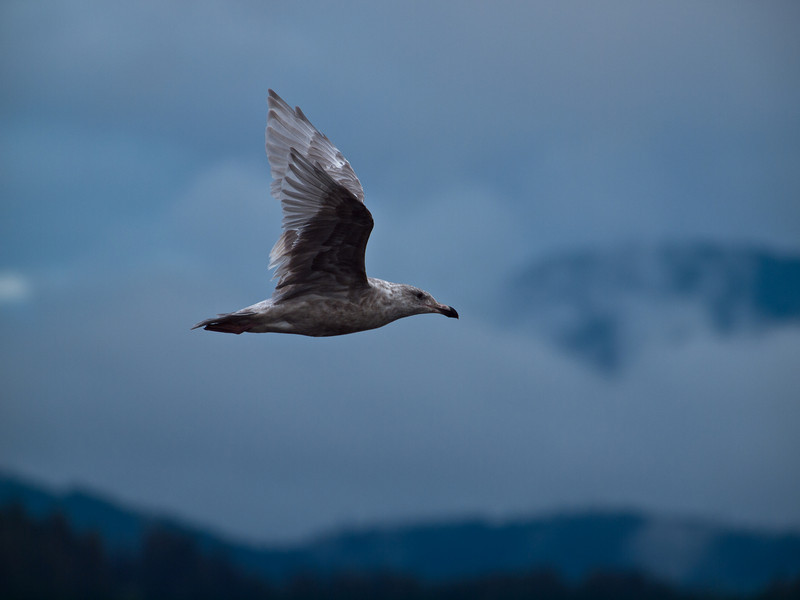 A low key photo of a seagull