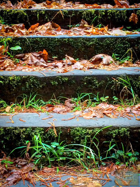 20141015_RedwoodsiPhone_0017.jpg