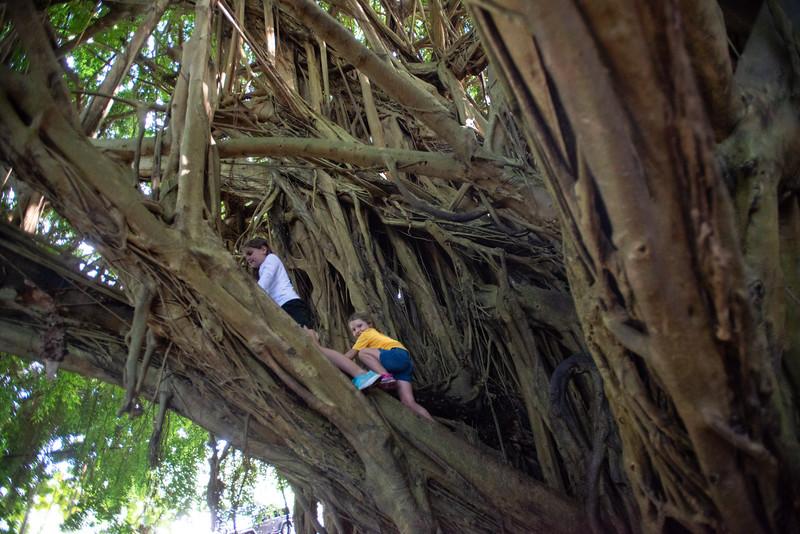 Hawaii2019-240.jpg