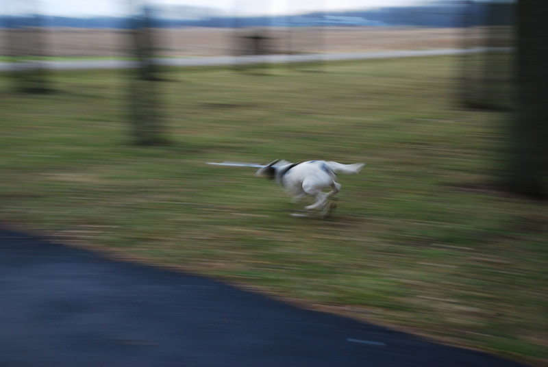 Panning this dog was almost impossible!