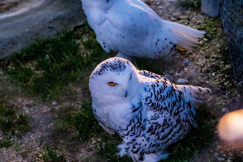 Tonis Zoo-0396.jpg