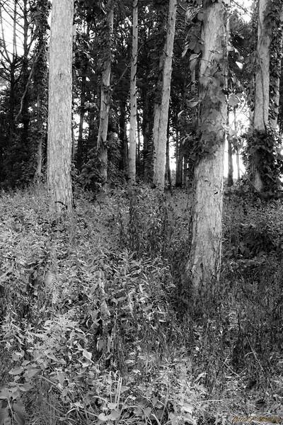 Winding Woods