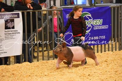 Hog Showmanship