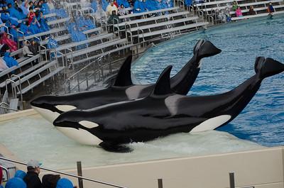 2014 December SeaWorld