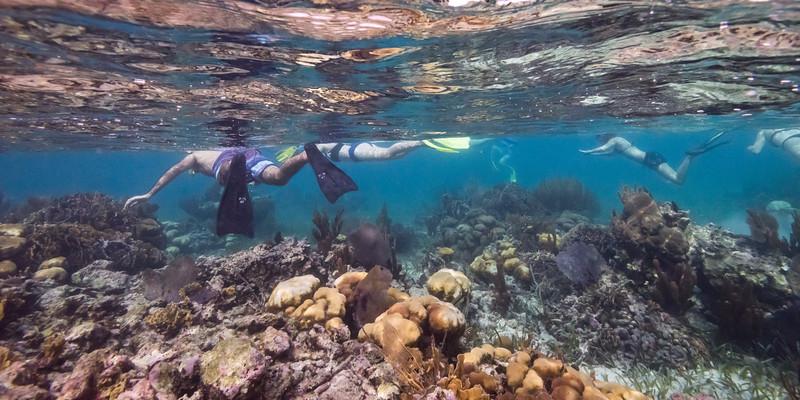 People snorkeling, Turneffe Atoll, Belize Barrier Reef, Belize