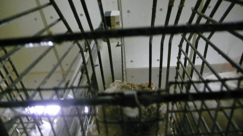 canards-foie-gras-2008-fr-B-008.jpg