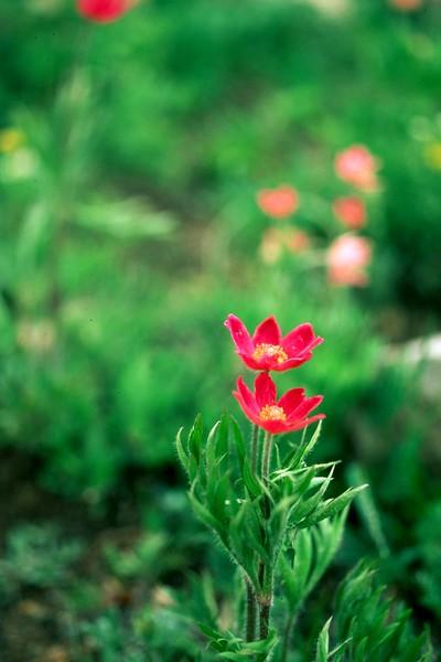 amh FLOWERS (1259).jpg