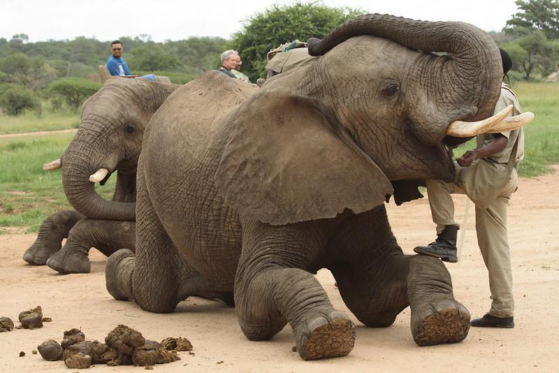 S Africa_S Africa_IMG_2211.JPG