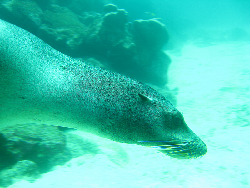 Diving in the Galapagos (118 of 392)