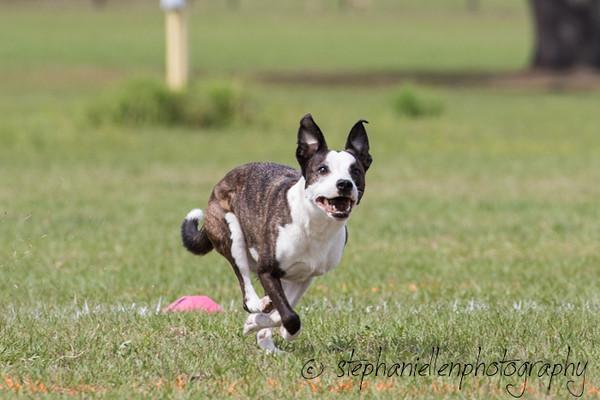 _MG_3077Up_dog_International_2016_StephaniellenPhotography.jpg