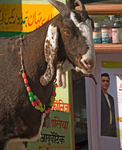 INDIA-2010-0201A-53A.jpg