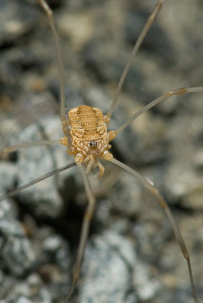 Stringy-Legged Mini Monsters